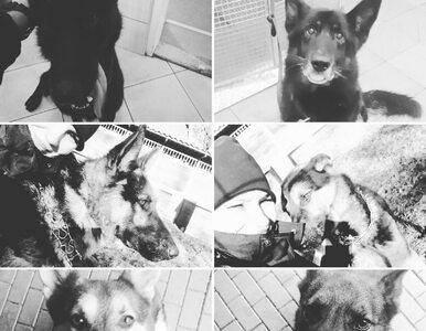 Śmierć sześciu policyjnych psów w gorącej wodzie. Ustalono przyczynę