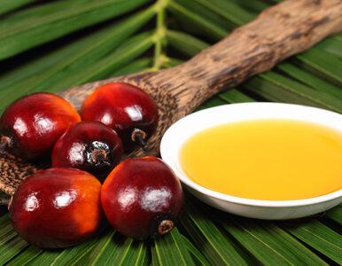 Olej palmowy. Bojkotować czy certyfikować?