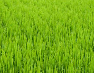 Gdyby Chińczycy umieli przechowywać żywność, jedliby więcej