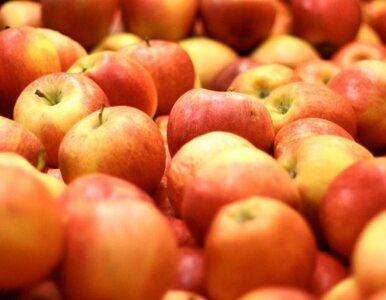 Z braku śliwek i gruszek - jabłka