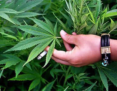 Kolejny kraj zalegalizował marihuanę