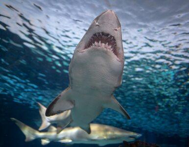 Atak rekina w Kalifornii. Nie żyje 26-letni surfer