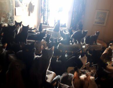 Kobieta miała bzika na punkcie kotów. W jej mieszkaniu znaleziono......
