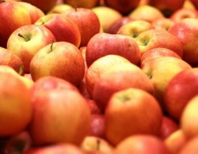 Są już pierwsze polskie jabłka