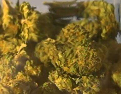 W Waszyngtonie zapalisz marihuanę legalnie