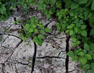 Ekspert: susza – mimo ulewnych opadów