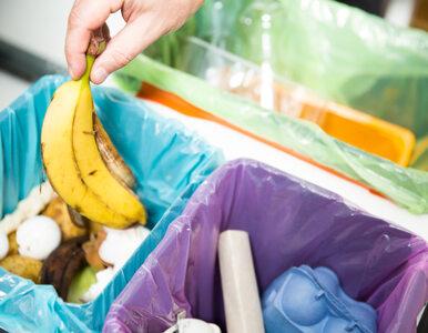 Segregacja odpadów. Za niewłaściwą kary mogą być dotkliwe. Jak robić to...