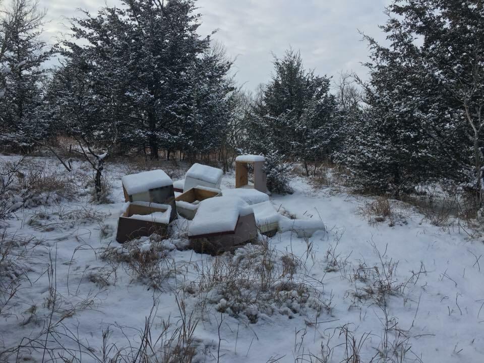 Zniszczona pasieka Wild Hill Honey