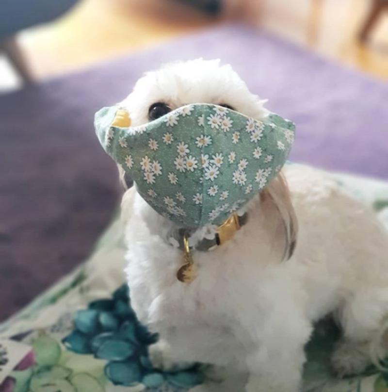 Pies w maseczce