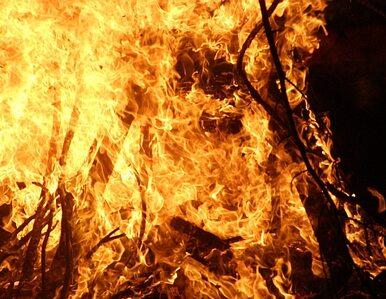 W Rosji płonie już prawie 200 tysięcy hektarów lasów i torfowisk