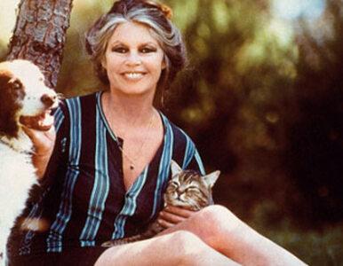 """Brigitte Bardot pisze list do Kopacz. """"Postępowanie niegodne..."""