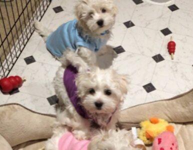 Barbra Streisand sklonowała swojego psa. PETA zaniepokojona