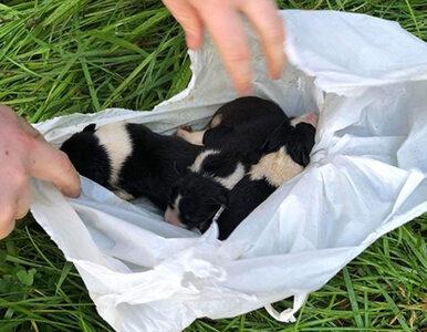 """Szczeniaki w plastikowej torbie nad rzeką. Były """"pozostawione na..."""