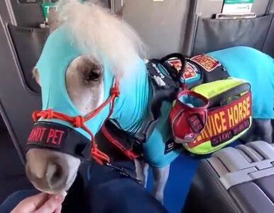 Pasażerka zabrała konia na pokład samolotu. Niezwykły film i zdjęcia...