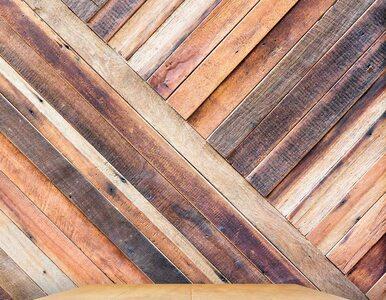 Handlowali fikcyjnym drewnem egzotycznym. Wyłudzili 60 mln złotych