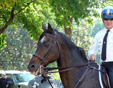 Policyjny koń uciekł właścicielce i... próbował przejechać się metrem