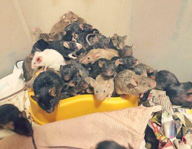 Wrocław. Ponad tysiąc myszy w jednym mieszkaniu. Ekostraż pokazała nagrania