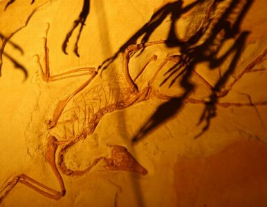 Odnaleziono nowy gatunek dinozaura. Był wielkości krowy