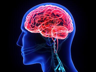 Naukowcy zaobserwowali wędrówkę myśli w mózgu