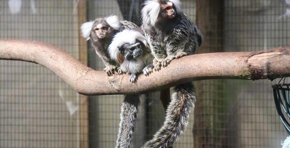 QUIZ o zwierzętach. Te gatunki wyginęły czy wciąż są na Ziemi?