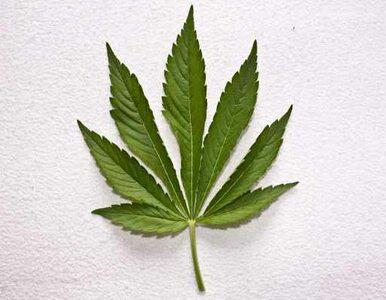Waszyngton legalizuje marihuanę