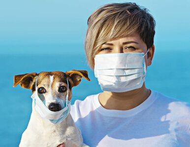 Koronawirus. W Hongkongu potwierdzono przypadek zarażenia psa od człowieka